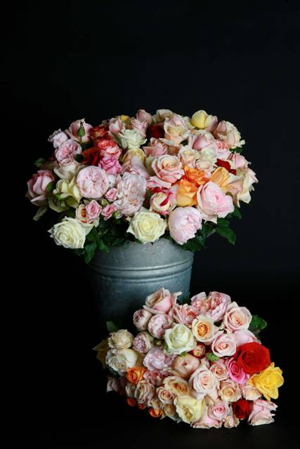 Mixed Field Roses
